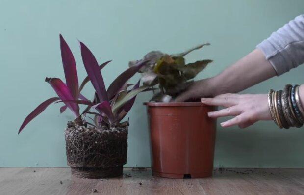 Rośliny/ screen yt