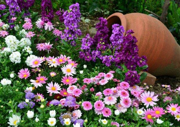kwiaty, screen YT