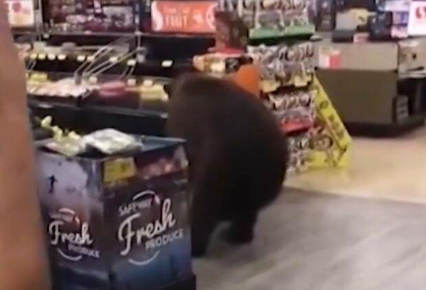 Niedźwiedź w sklepie!/screen Twitter
