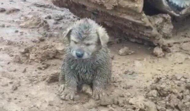 Pies znaleziony na budowie/goodtimes.my