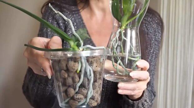 Rozmnażanie storczyków. Źródło: Youtube Rytmy Natury