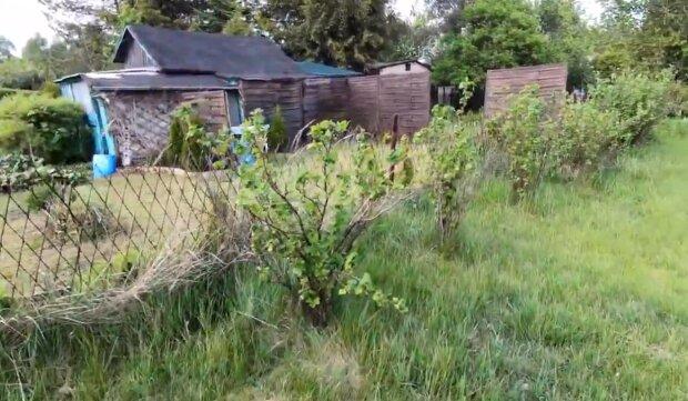 Ogródki działkowe/YouTube @Bonar na szlaku
