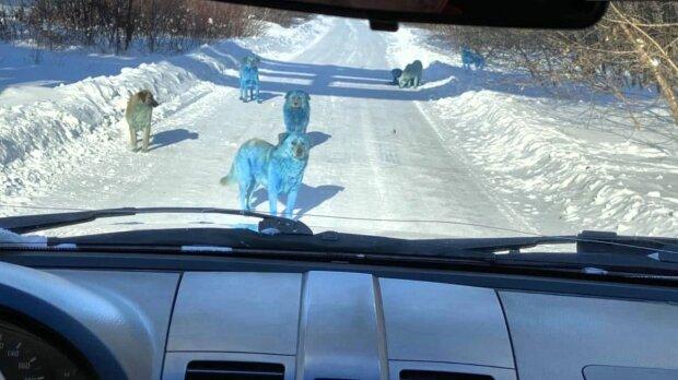 Niebieskie psy. Źródło: Twitter @russopolit